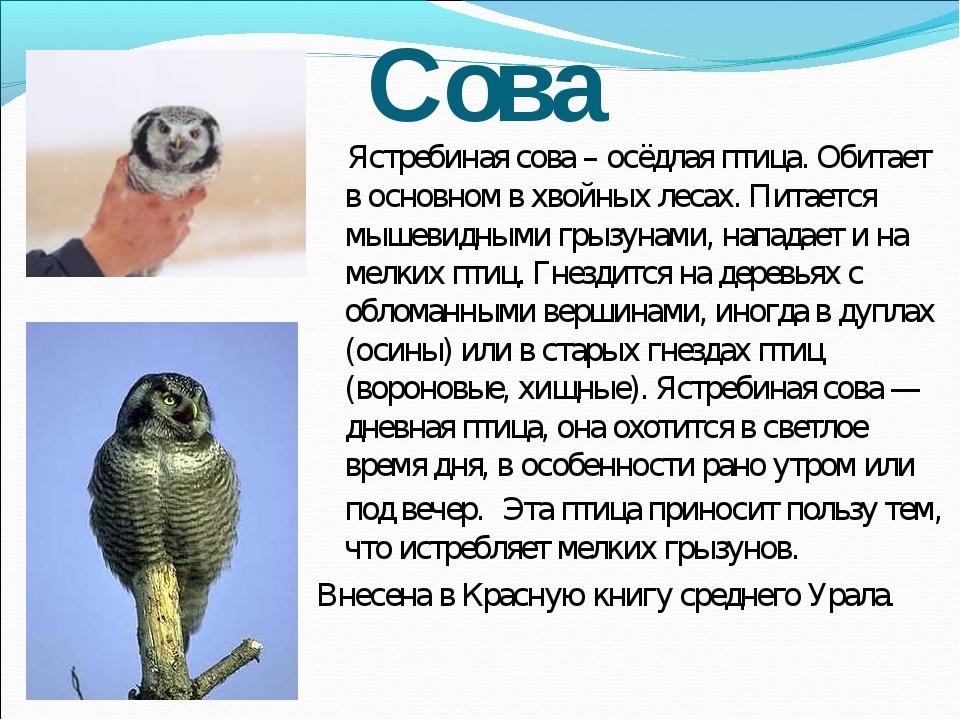 Сова Ястребиная сова – осёдлая птица. Обитает в основном в хвойных лесах. Пит...