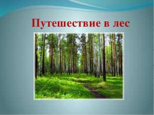 Путешествие в лес