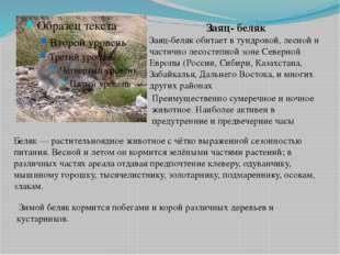 Заяц- беляк Заяц-беляк обитает в тундровой, лесной и частично лесостепной зон