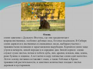 Олень олени завезены с Дальнего Востока, где они предпочитают широколиственны