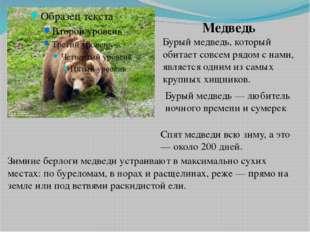 Медведь Бурый медведь, который обитает совсем рядом с нами, является одним из