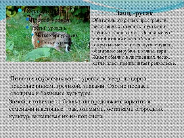 Заяц -русак Обитатель открытых пространств, лесостепных, степных, пустынно-ст...
