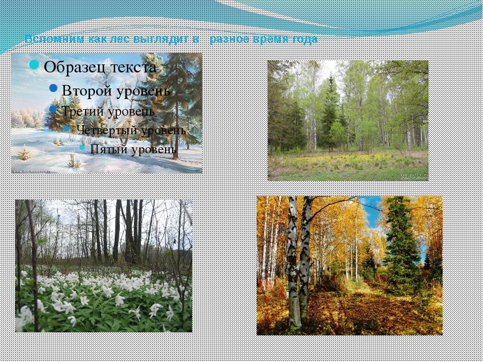 Вспомним как лес выглядит в разное время года