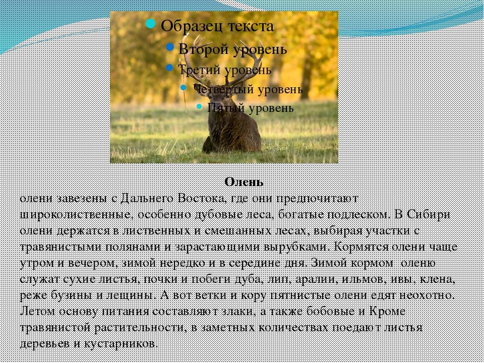Олень олени завезены с Дальнего Востока, где они предпочитают широколиственны...