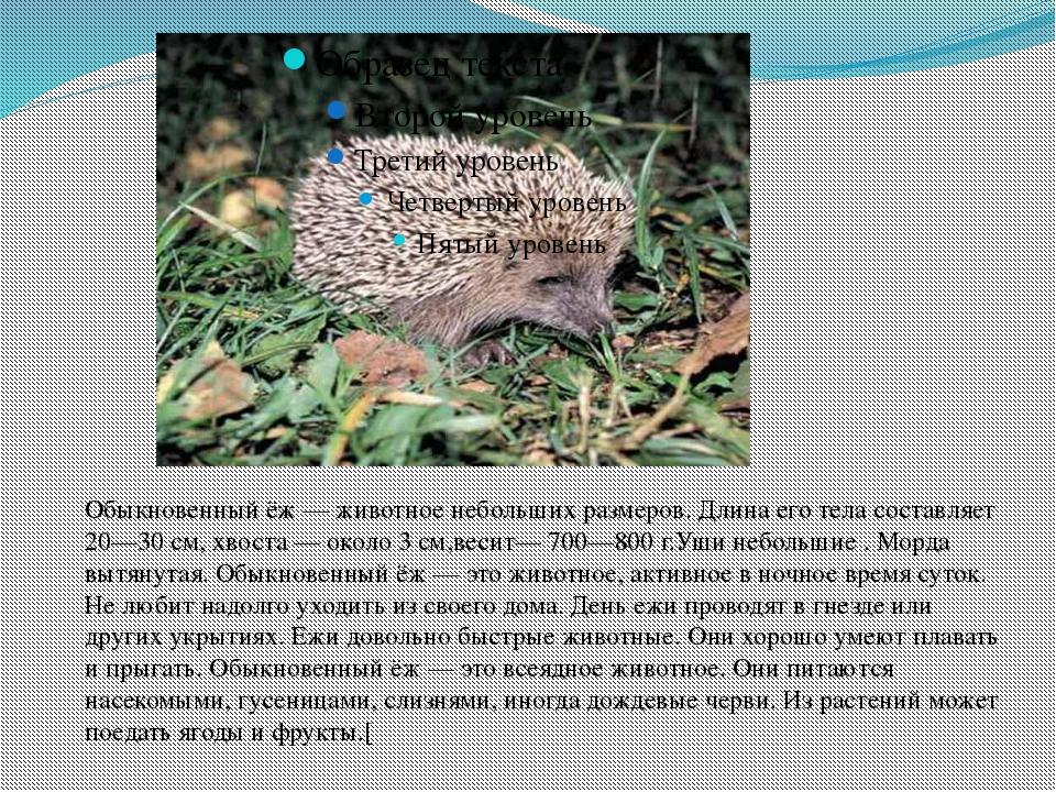 Обыкновенный ёж — животное небольших размеров. Длина его тела составляет 20—3...