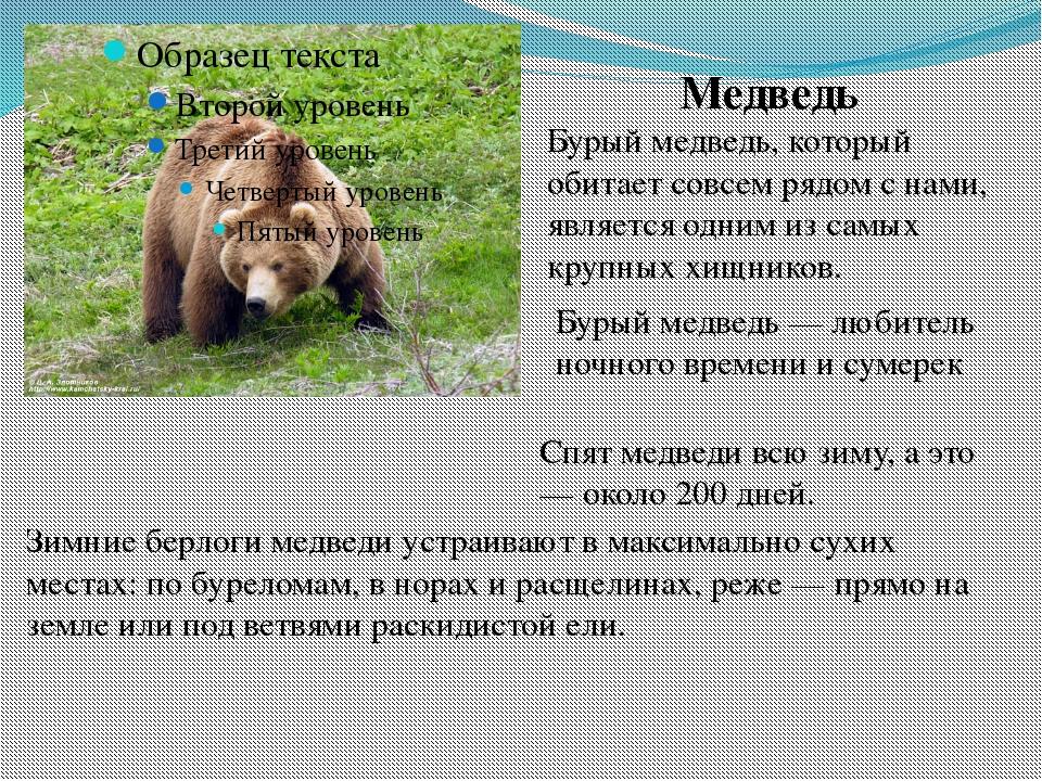 Медведь Бурый медведь, который обитает совсем рядом с нами, является одним из...