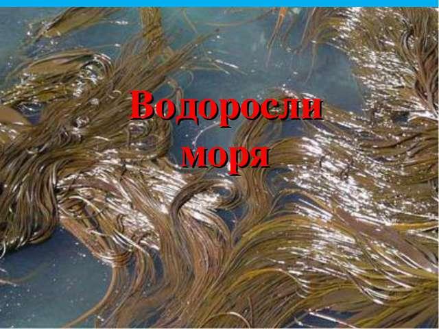 Водоросли моря