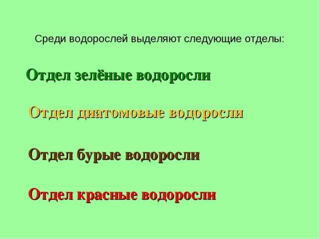 Среди водорослей выделяют следующие отделы: Отдел зелёные водоросли Отдел бур...