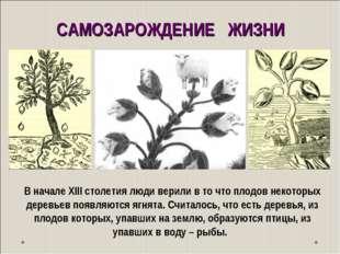В начале ХIII столетия люди верили в то что плодов некоторых деревьев появляю