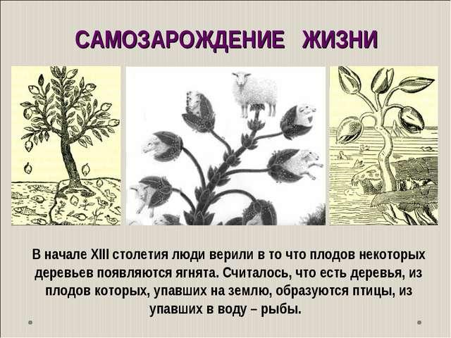 В начале ХIII столетия люди верили в то что плодов некоторых деревьев появляю...