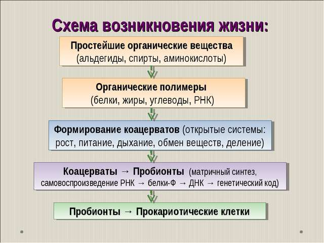 Схема возникновения жизни: Пробионты → Прокариотические клетки Простейшие орг...