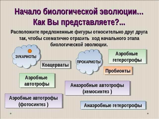 Начало биологической эволюции… Как Вы представляете?... Коацерваты Пробионты...