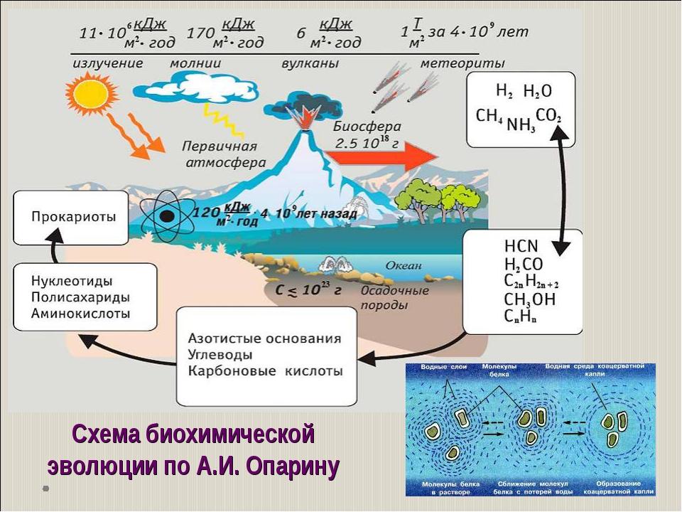 Схема биохимической эволюции по А.И. Опарину