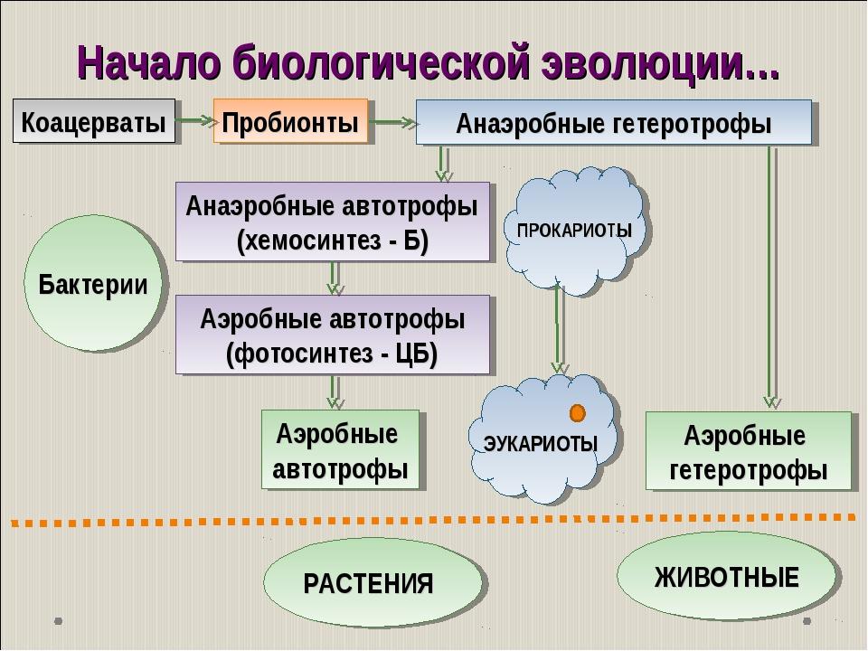 Начало биологической эволюции… Коацерваты Пробионты Анаэробные автотрофы (хем...