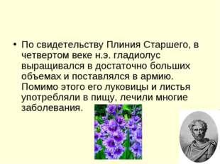 По свидетельству Плиния Старшего, в четвертом веке н.э. гладиолус выращивался