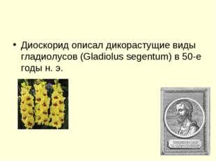 Диоскорид описал дикорастущие виды гладиолусов (Gladiolus segentum) в 50-е го