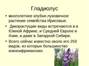 Гладиолус многолетнее клубне-луковичное растение семейства Ирисовые. Дикораст