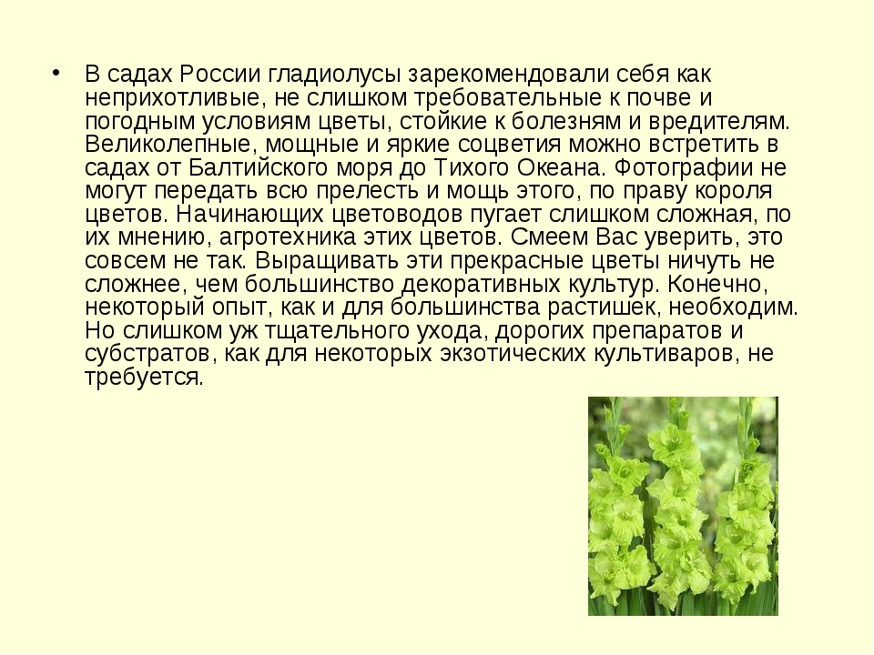 В садах России гладиолусы зарекомендовали себя как неприхотливые, не слишком...