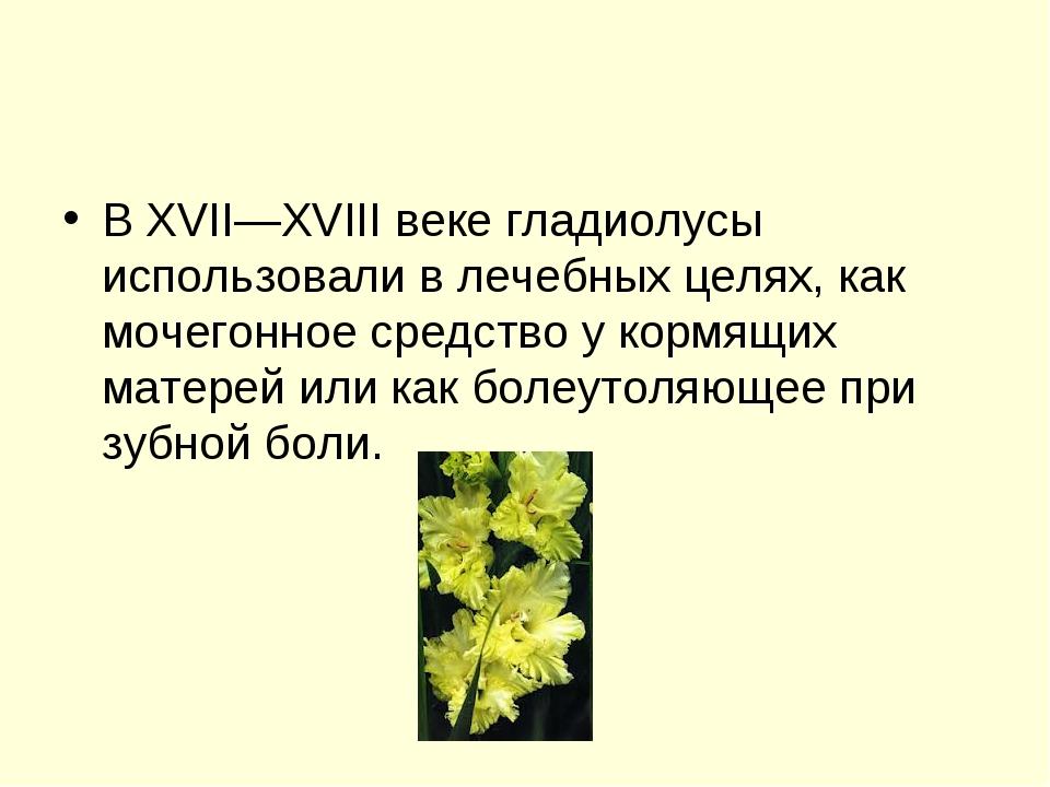 В XVII—XVIII веке гладиолусы использовали в лечебных целях, как мочегонное ср...