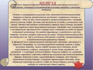 На Руси береза издревле являлась символом грациозности и чистоты, который ол