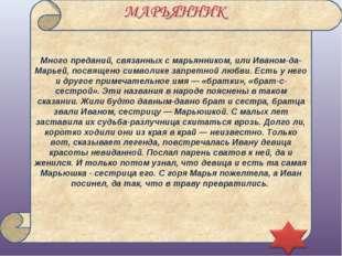 Много преданий, связанных с марьянником, или Иваном-да-Марьей, посвящено симв