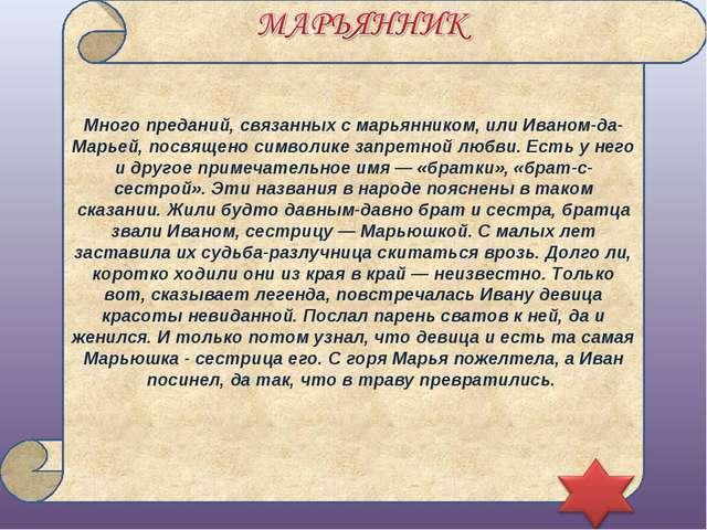 Много преданий, связанных с марьянником, или Иваном-да-Марьей, посвящено симв...