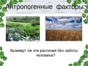 Антропогенные факторы: Выживут ли эти растения без заботы человека?