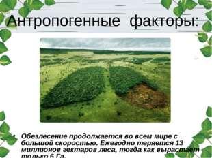 Антропогенные факторы: Обезлесение продолжается во всем мире с большой скорос