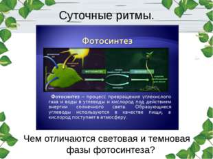 Суточные ритмы. Чем отличаются световая и темновая фазы фотосинтеза?
