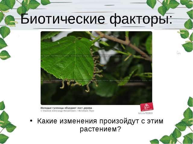 Биотические факторы: Какие изменения произойдут с этим растением?