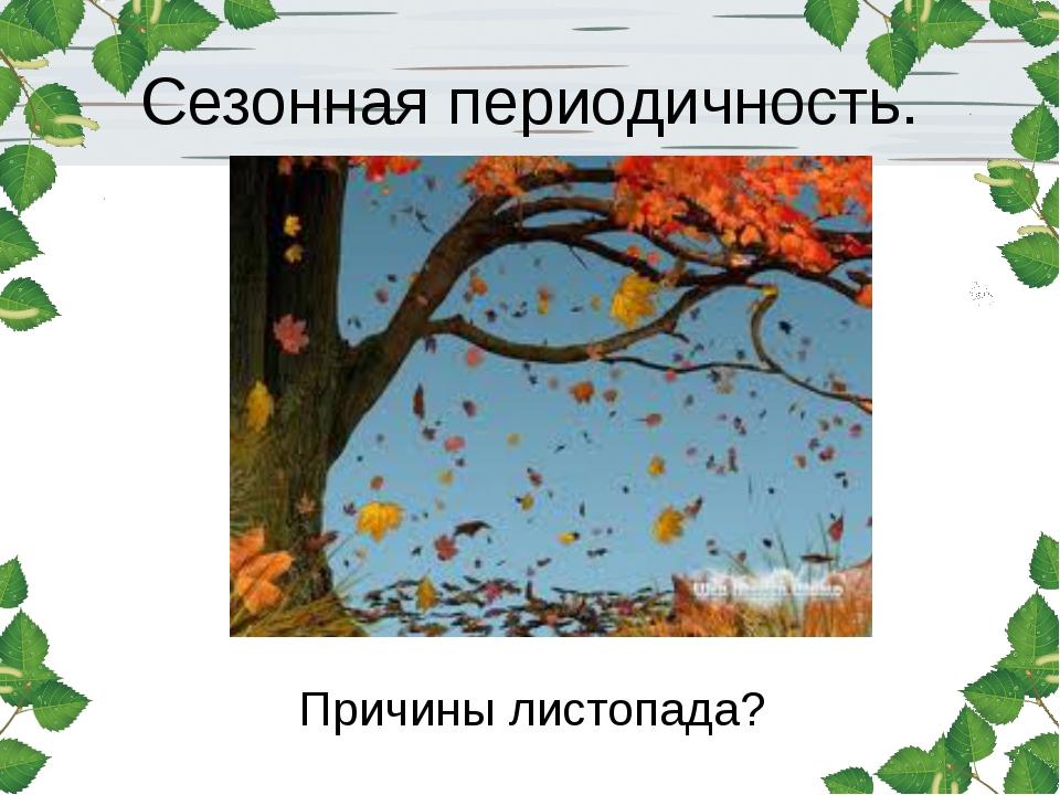 Сезонная периодичность. Причины листопада?