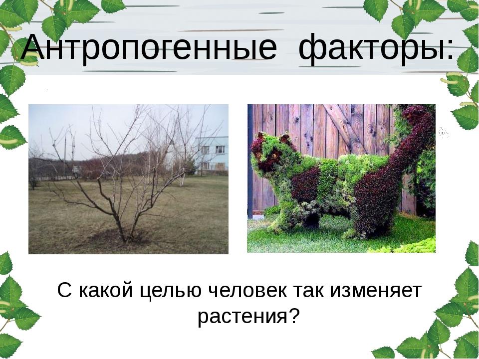 Антропогенные факторы: С какой целью человек так изменяет растения?