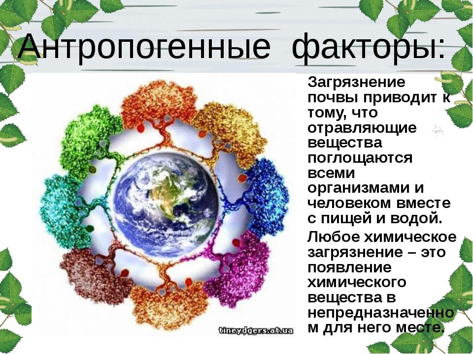 Антропогенные факторы: Загрязнение почвы приводит к тому, что отравляющие вещ...