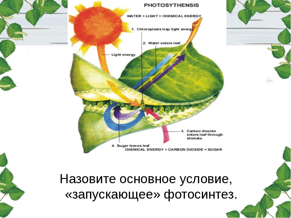 Назовите основное условие, «запускающее» фотосинтез.