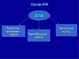 Состав АТФ АТФ Азотистое основание – аденин Простой сахар – рибоза Три остатк