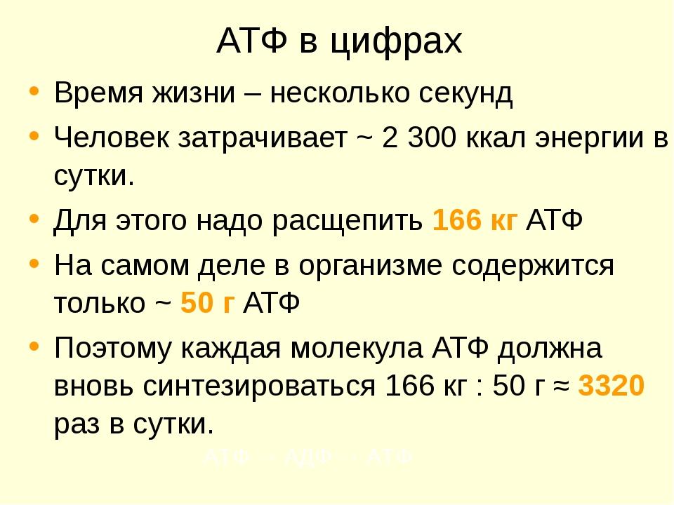 АТФ в цифрах Время жизни – несколько секунд Человек затрачивает ~ 2 300 ккал...