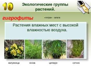 Экологические группы растений. гигрофиты «гигра» - влага калужница осока ципе