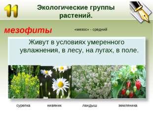 Экологические группы растений. мезофиты «мезос» - средний сурепка нивяник лан