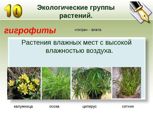 Экологические группы растений. гигрофиты «гигра» - влага калужница осока ципе...