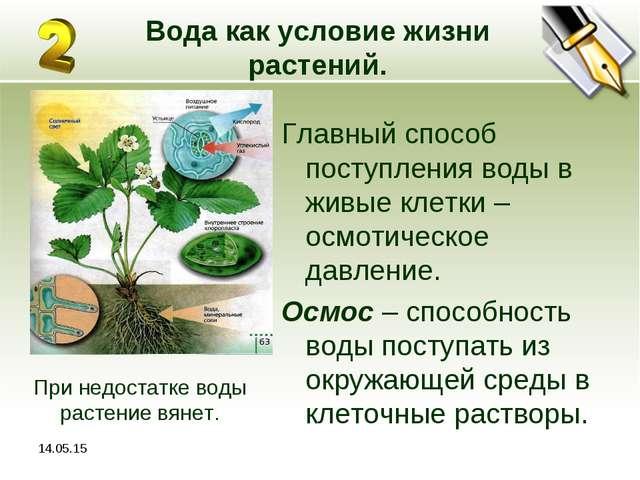 * Вода как условие жизни растений. Главный способ поступления воды в живые кл...