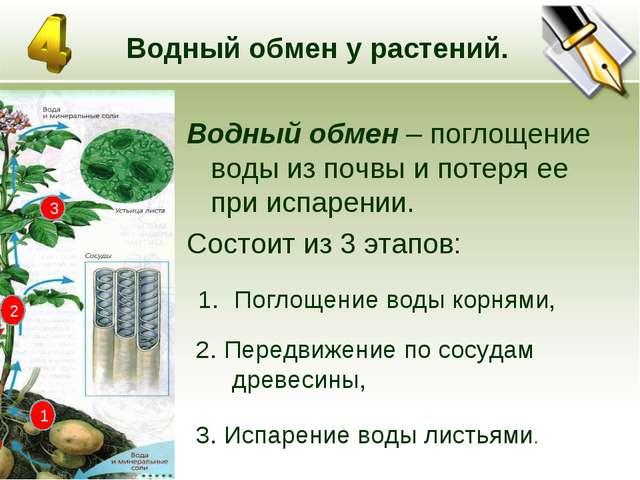 * Водный обмен у растений. Водный обмен – поглощение воды из почвы и потеря е...