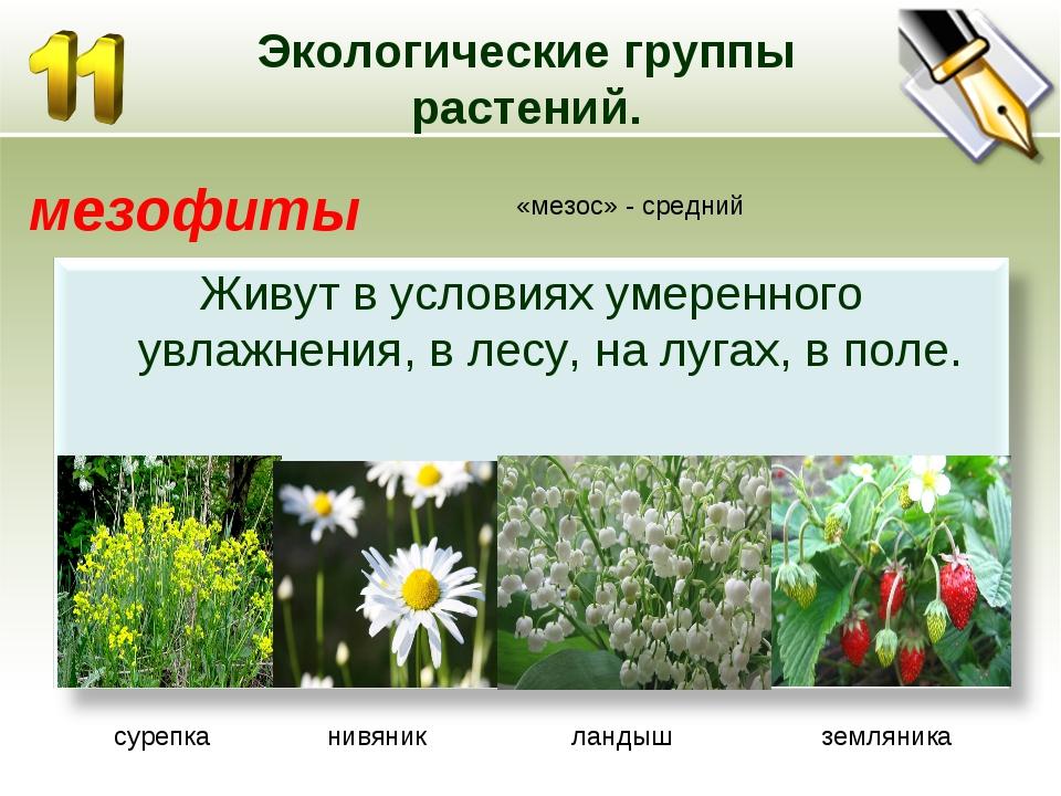 Экологические группы растений. мезофиты «мезос» - средний сурепка нивяник лан...