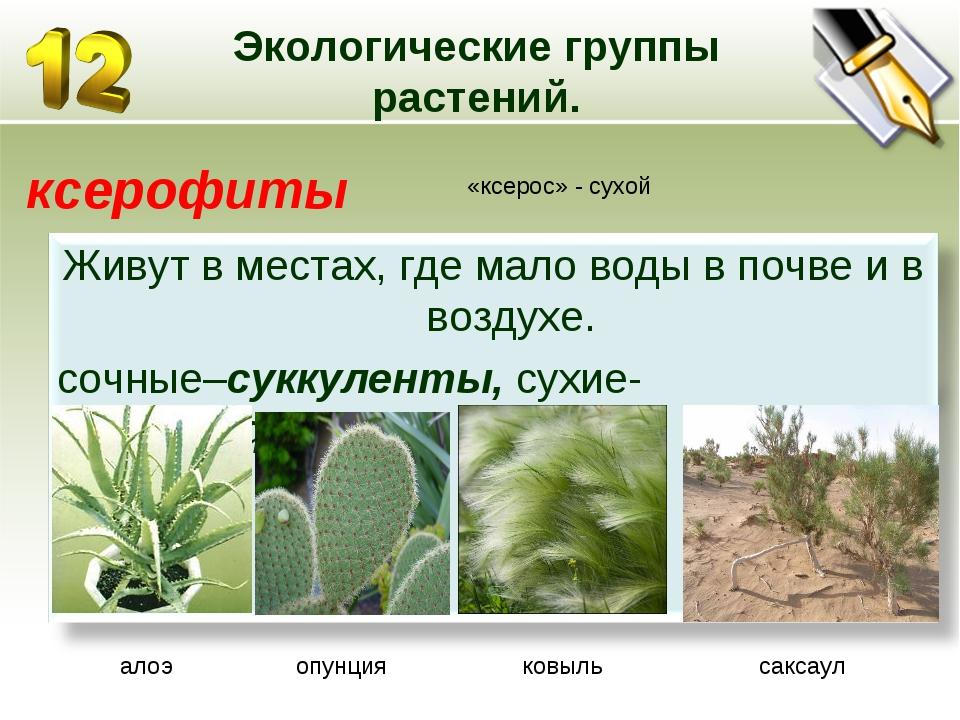 Экологические группы растений. ксерофиты «ксерос» - сухой алоэ опунция ковыль...
