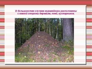 В большинстве случаев муравейники расположены с южной стороны деревьев, пней,