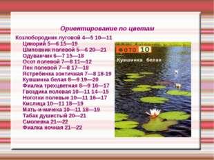 Ориентирование по цветам Козлобородник луговой 4—5 10—11 Цикорий 5—6 15—19 Ши