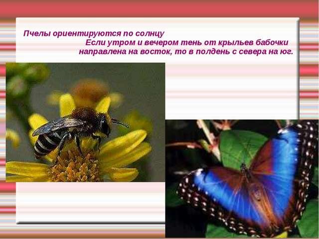 Пчелы ориентируются по солнцу Если утром и вечером тень от крыльев бабочки на...