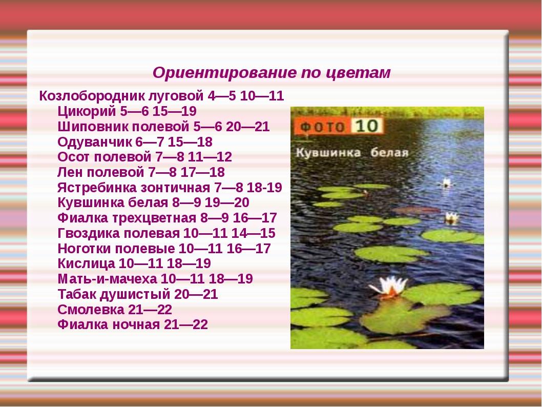 Ориентирование по цветам Козлобородник луговой 4—5 10—11 Цикорий 5—6 15—19 Ши...