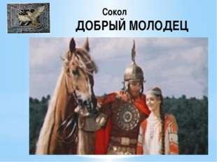 Сокол ДОБРЫЙ МОЛОДЕЦ