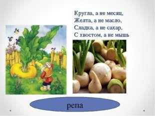 репа Кругла, а не месяц, Желта, а не масло, Сладка, а не сахар, С хвостом, а