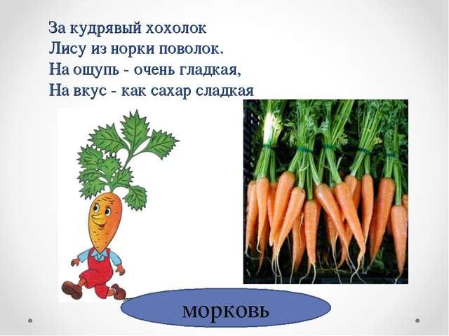 морковь За кудрявый хохолок Лису из норки поволок. На ощупь - очень гладкая,...